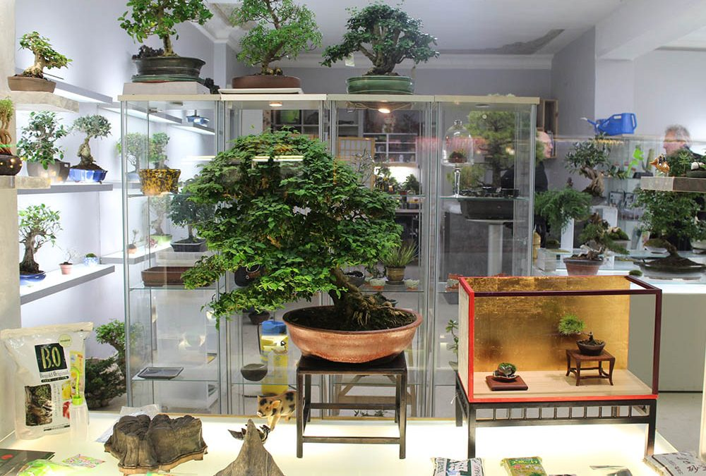 bonsai concept charlottenburg nipponya. Black Bedroom Furniture Sets. Home Design Ideas