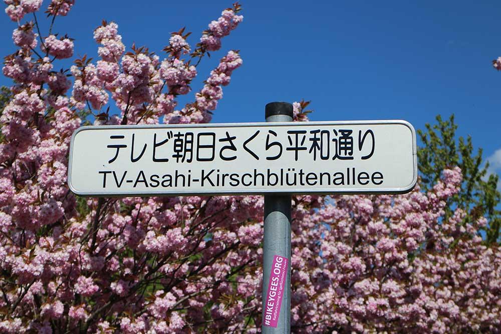 TV-Asahi-Kirschblütenallee